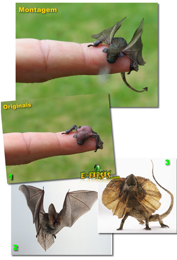 1 – Microbat (foto: Andrew Burton) 2 – Morcego (foto: DK Images) 3 – Lagarto de Gola (foto: DK Images)