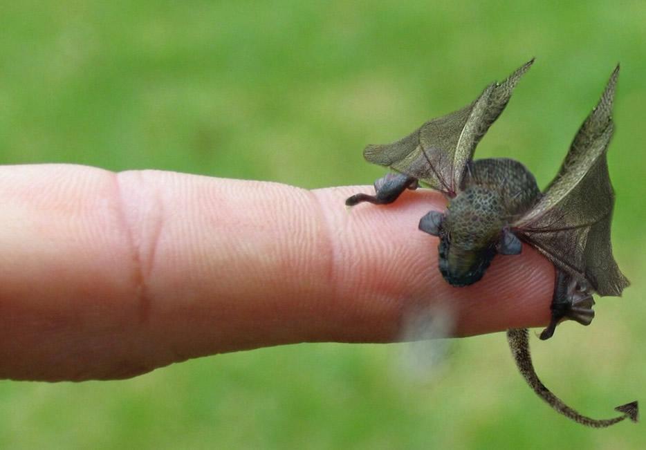 Filhote de dragão encontrado! Verdadeiro ou farsa?