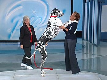 Gibson no Programa da Oprah - 2007 (reprodução)