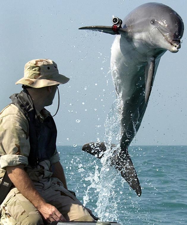 golfinhos_assassinos