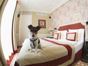 A cachorra Ella sobe na cama de um dos quartos do hotel Sacher (Foto: Leonhard Foeger/Reuters)