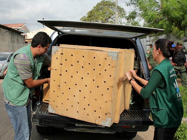 A presença de cobras em bueiros é comum, segundo a analista ambiental do Ipaam Alessandra Veras (Foto: Tiago Melo/G1 AM)