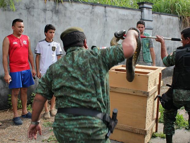 Cobra foi levada para a sede do Centro de Triagem do Ibama (Foto: Tiago Melo/G1 AM)