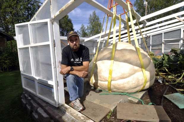 Abóbora gigante não poderá participar do campeonato no Alasca por conta de defeito (Foto: Greg Skinner/ AP)
