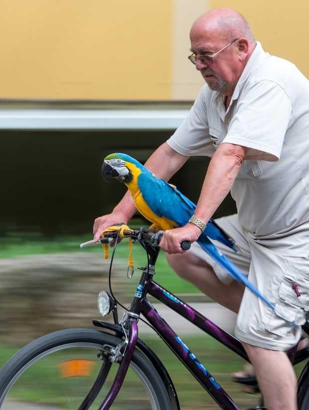 Daisy adora passear de bicicleta pelas ruas de Soemmerda (Foto: Michael Reiche/ AFP)