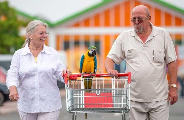 Ave acompanha os donos em todas as tarefas e passeios (Foto: Michael Reiche/ AFP)