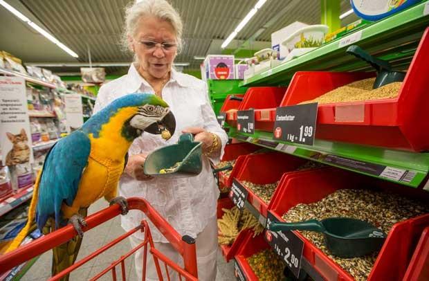 Arara ajuda na escolha de produtos em mercado alemão (Foto: Michael Reiche/ AFP)