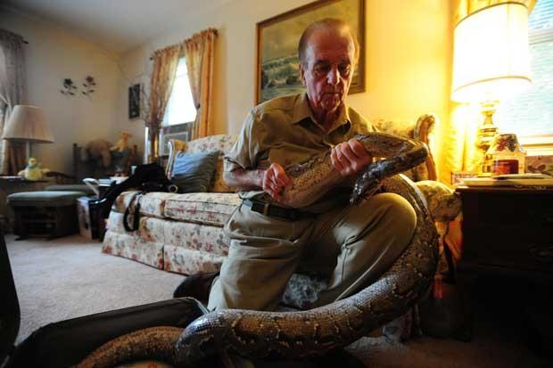 Gerald Zelenka, um professor de biologia aposentado, adota uma cobra como animal de estimação nos EUA (Foto: Marko Georgiev, The Record of Bergen County/ AP)