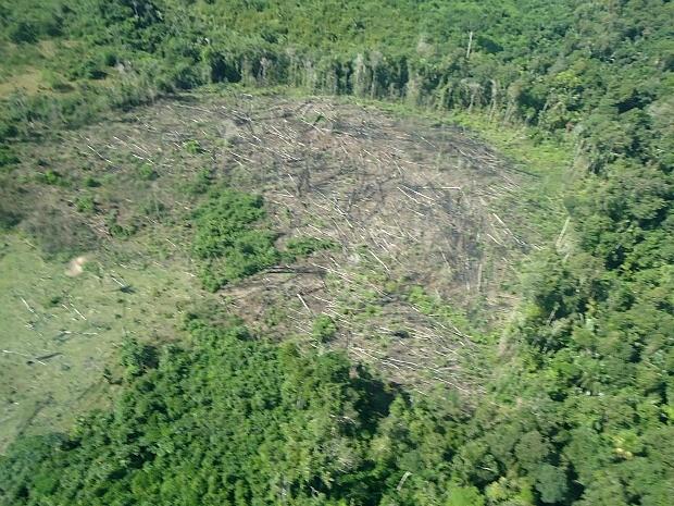Área desmatada localizada pelo Ibama no município de Apuí (Foto: Divulgação/Ibama)
