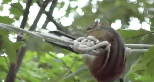 Animal tenta manter o equilíbrio com várias piruetas na corda (Foto: Reprodução/YouTube/Petsami)