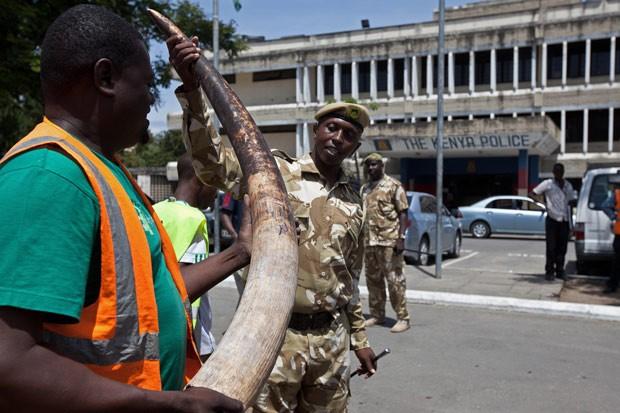 Funcionários observam presa de marfim apreendida. (Foto: AFP Photo/Ivan Lieman)