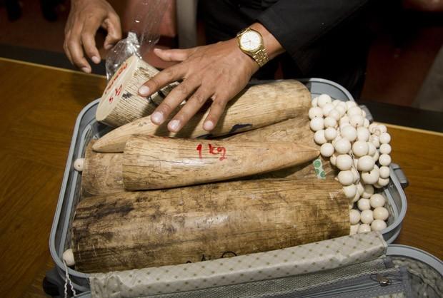 Presas de marfim e contas feitas do material foram encontradas em malas na Tailândia. (Foto: AP Photo/Sakchai Lalit)
