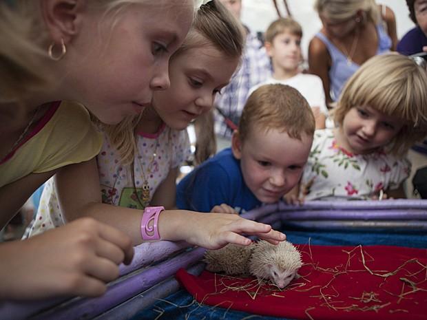 Crianças acariciam filhotes albinos de ouriço (Foto: Alexander Zemlianichenko Jr/AP)