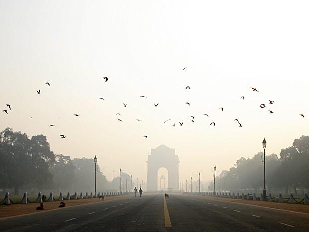 Aves adequam voo à velocidade das estradas para evitar colisões e mortes (Foto: Maral Deghati/AFP)