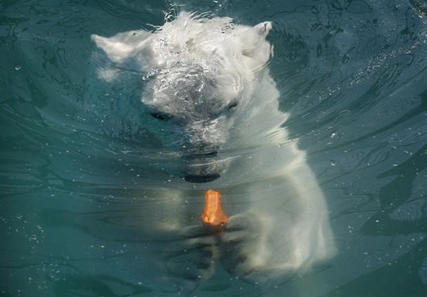Aurora come uma cenoura embaixo d'água em piscina do zoológico. (Foto: Reuters/Ilya Naymushin)