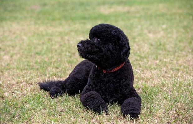 Sunny é a nova irmã de Bo, o cachorro da família há quase cinco anos (Foto: Official White House Photo/Pete Souza)