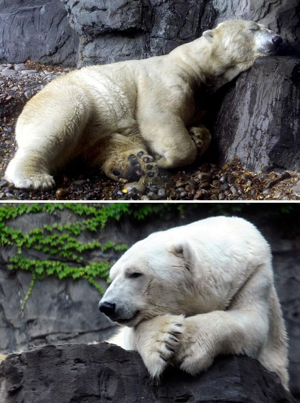 Urso Gus em fotos de arquivo da agência AP (Foto: Diane Bondareff/AP)