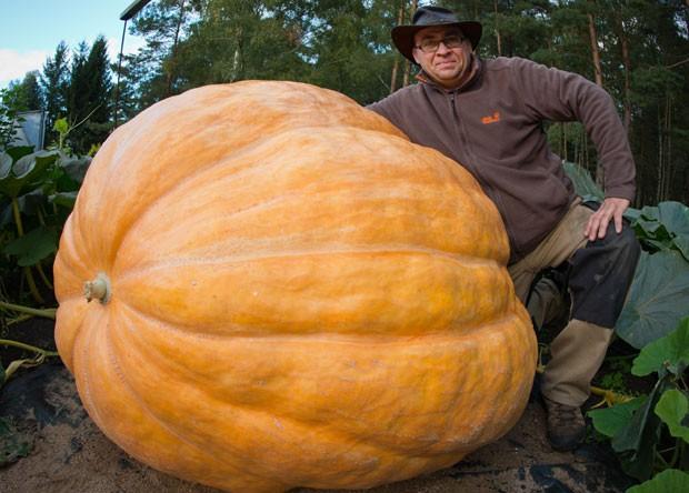 Oliver Langheim exibiu na quinta-feira (19) uma abóbora de 320 quilos na horta de sua casa (Foto: Patrick Pleul/DPA/AFP)