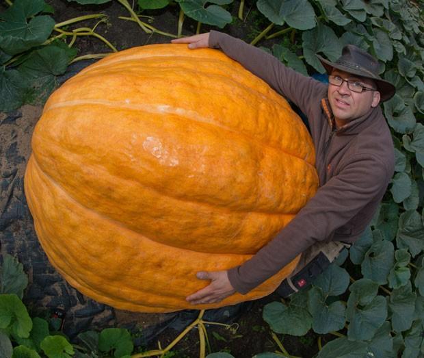 Oliver Langheim cultiva a abóbora gigante em sua propriedade em Fürstenwalde (Foto: Patrick Pleul/DPA/AFP)
