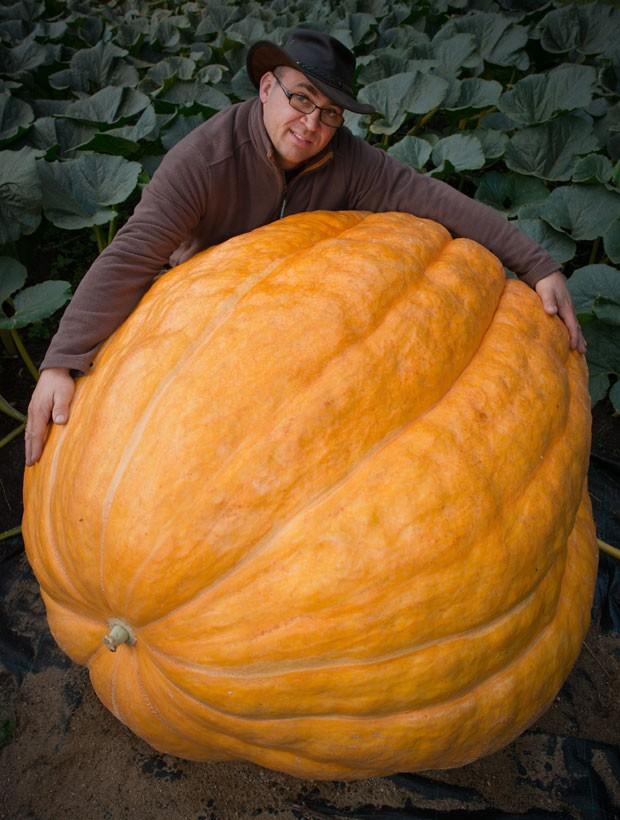 Vegetal vem crescendo de quatro a cinco quilos por dia (Foto: Patrick Pleul/DPA/AFP)