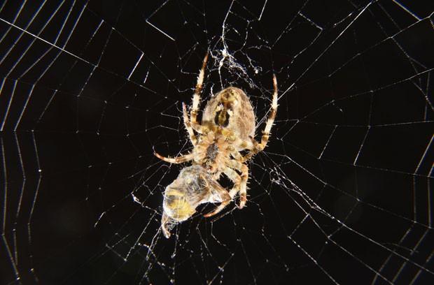 Aranha 'embalou' uma vespa em sua teia em um jardim em Londres (Foto: Toby Melville/Reuters)