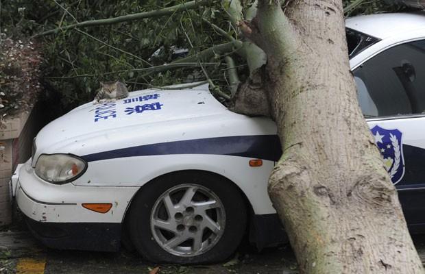 Gato foi fotografado descansando no capô de uma viatura da polícia parcialmente destruída por queda de árvore (Foto: Stringer/Reuters)