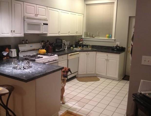Por causa da popularidade instantânea do anúncio, apartamento foi alugado em menos de 24 horas (Foto: Reprodução)