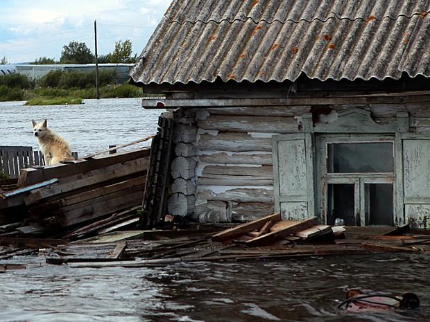 Imagem do dia 3 mostra cão em cima de pedaços de madeira para se proteger da enchente no município russo de Khorpinsky (Foto: Vladimir Kosarev/AFP)