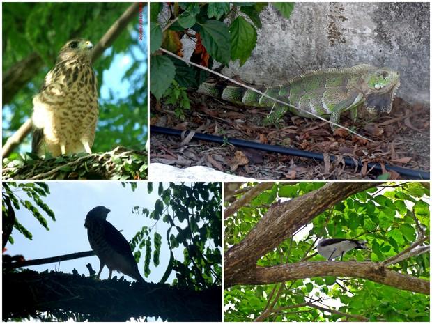 Aves raras e outros tipos de bichos silvestres são vistos no cemitério. (Foto: Divulgação/ Parque das Flores)