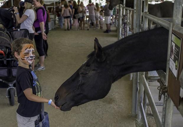 O garoto Brian, de 6 anos, dá comida ao cavalo Sasha, na instituição The Gentle Barn. (Foto: AFP Photo/Joe Klamar)