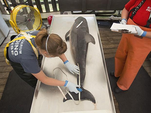 Ric O'Barry (dir.) ergue cartaz em japonês: 'Salvem os golfinhos no Japão', ao lado do ativista japonês Satoshi Komiyama (Foto: Dolphin Project/AP)