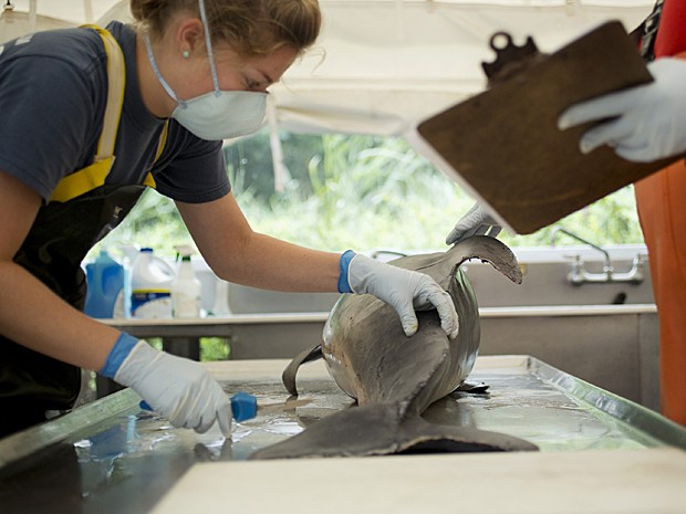 Garoto britânico que perdeu parte das pernas com o golfinho Winter (Foto: Jim Damaske/AP)