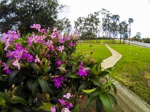 Cemitério possui mais de 23 tipos de flores tropicais. (Foto: Jonathan Lins/G1 AL)