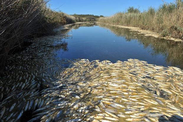 Peixes morreram provavelmente devido à falta de oxigênio no lago Ismarida, na Grécia. (Foto: AFP Photo/Sakis Mitrolidis)