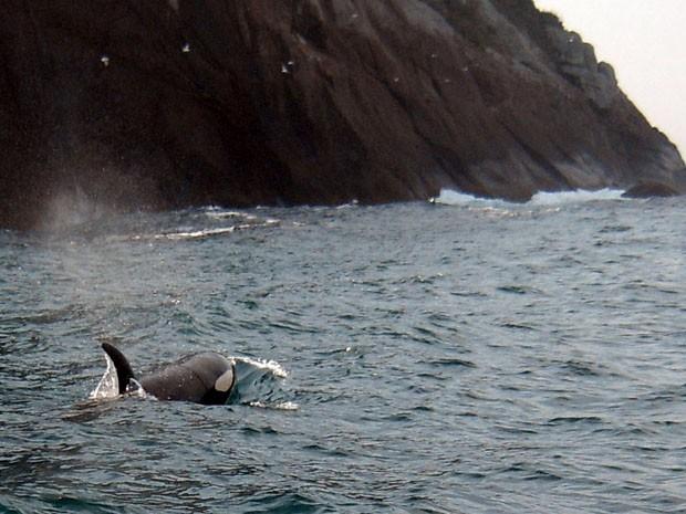 Mergulhadores flagram orcas em Ilhabela, no litoral norte de SP (Foto: Gustavo Notari e João Brom)