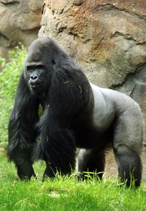 Patrick será transferido (Foto: AP/Zoo de Dallas)