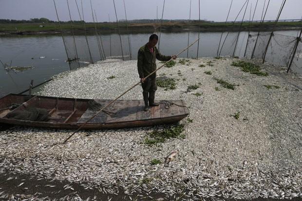 Pescador chinês olha para milhares de peixes mortos no Rio Fuhe, na região central da China. (Foto: AFP Photo)