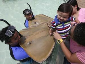 Criança toca em arraia na beira da piscina (Foto: Bullit Marquez/AP)