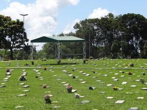 Cemitério possui cerca de 800 unidades de árvore em seu território. (Foto: Natália Souza/G1)
