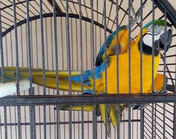 Polícia de Miami abriu uma investigação para encontrar um papagaio falante que foi roubado (Foto: Miami-Dade Police Dept/AP)
