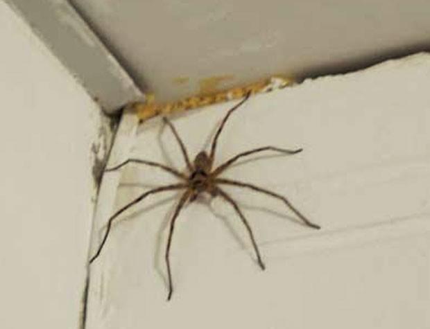 Jovem chamou a polícia ao se assutar com 'aranha enorme' (Foto: Arquivo/Utica Police Department/Divulgação)