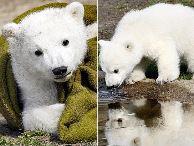 Urso polar Knut em imagem de arquivo de março de 2007 (Foto: Michael Sohn/AP)
