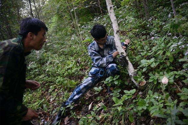Membros da WWF instalam câmera em reserva chinesa onde veados foram soltos para servirem de alimento para tigres. (Foto: AFP Photo/Wang Zhao)