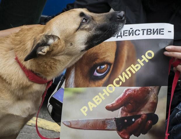 Cachorro é fotografado ao lado de cartaz levado por manifestantes, que criticam violência contra animais de rua. (Foto: Reuters/Gleb Garanich)