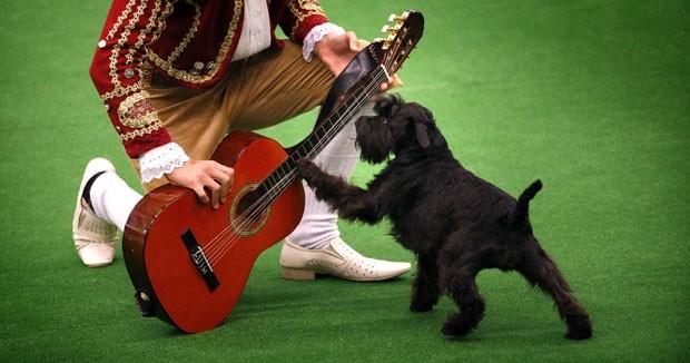 Um cão foi fotografado tocando um violão durante um campeonato em que os donos dançam com seus cães. O evento conhecido como Dogdance foi realizado em Burgum, na Holanda (Foto: Catrinus van der Veen/ANP/AFP)