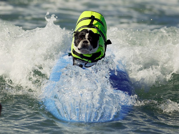 Cachorro participa de campeonato de surfe na Califórnia, nos EUA, neste domingo (29) (Foto: Lucy Nicholson/Reuters)