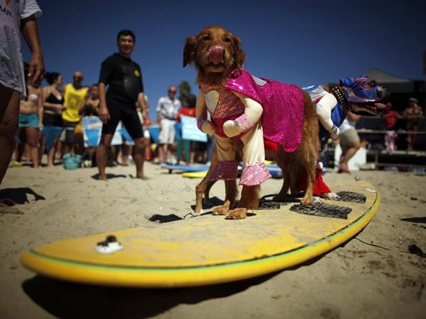 Cães fantasiados se preparam para participar de prova de surfe na Califórnia, nos EUA (Foto: Lucy Nicholson/Reuters)
