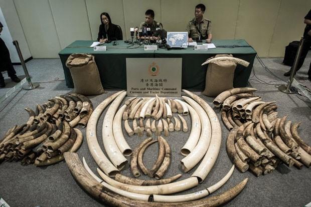Contrabando de marfim encontrado por autoridades de Hong Kong (Foto: Philippe Lopez/AFP)