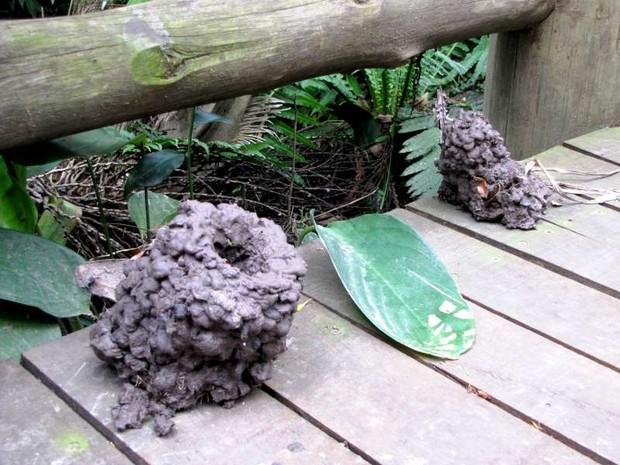 Tocas de Lagostim foram encontradas no Parque Beto Carrero World (Foto: Beto Carrero World/Divulgação)