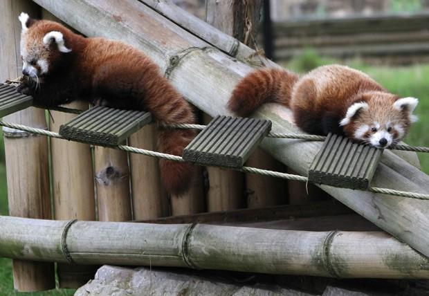 Irmãos brincam em pequena ponte no parque onde vivem. (Foto: AFP Photo/Charly Triballeau)